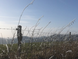 Eisgräser1